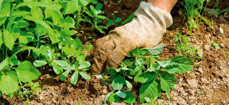 ТОП 10 кращих гербіцидів або коштів від бур'янів і трави