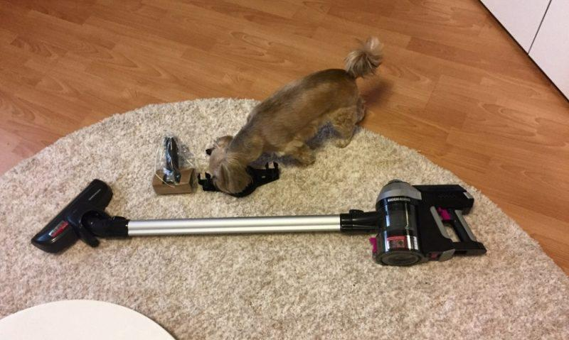 Пилосос килим і собака