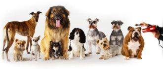 ТОП-10 кращих машинок для стрижки собак
