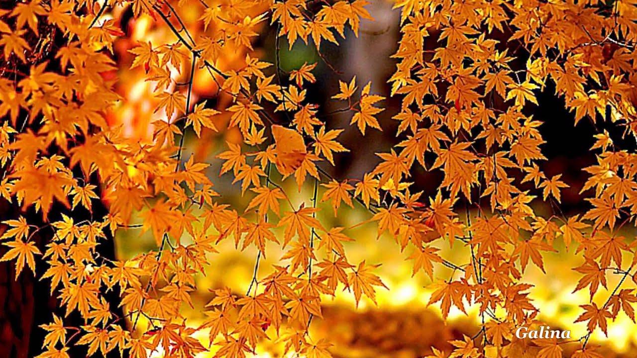 Добірка віршів про осінь
