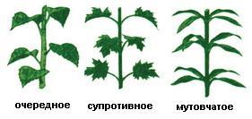Будова листка