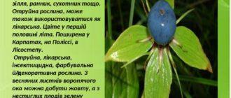 Рослина вороняче око
