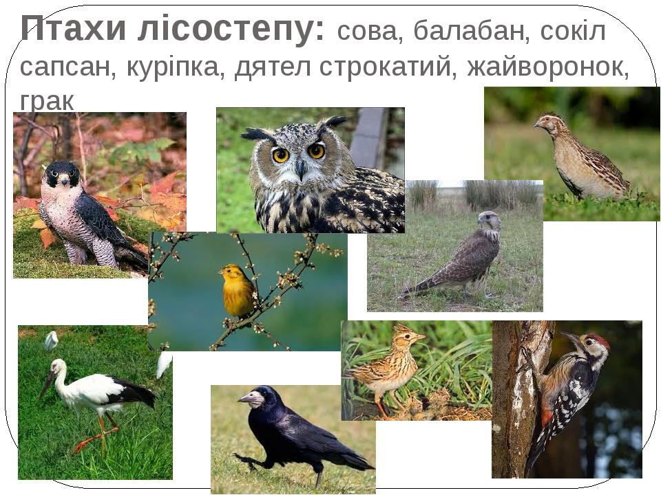 Птахи лісостепу