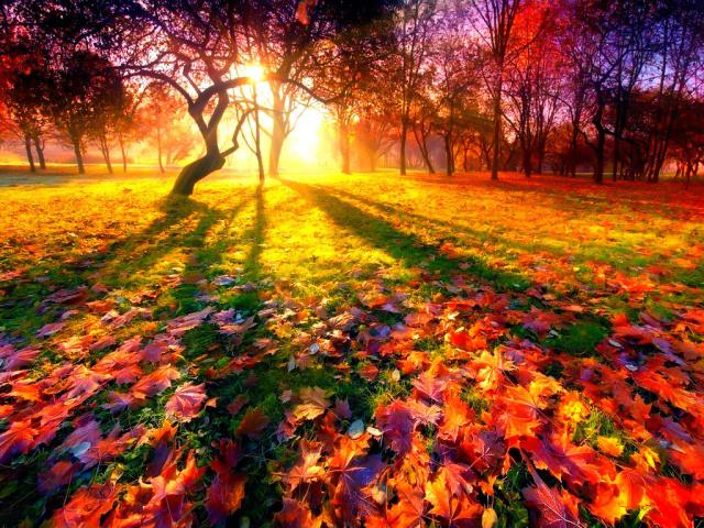 Речення про осінь