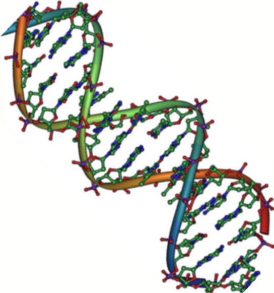 Будова і властивості ДНК