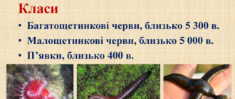 Кільчасті черви - загальна характеристика, цікаві факти