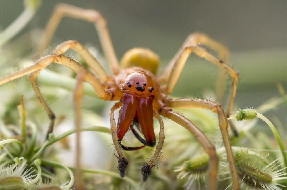 Павуки України: отруйні види, домашні павуки