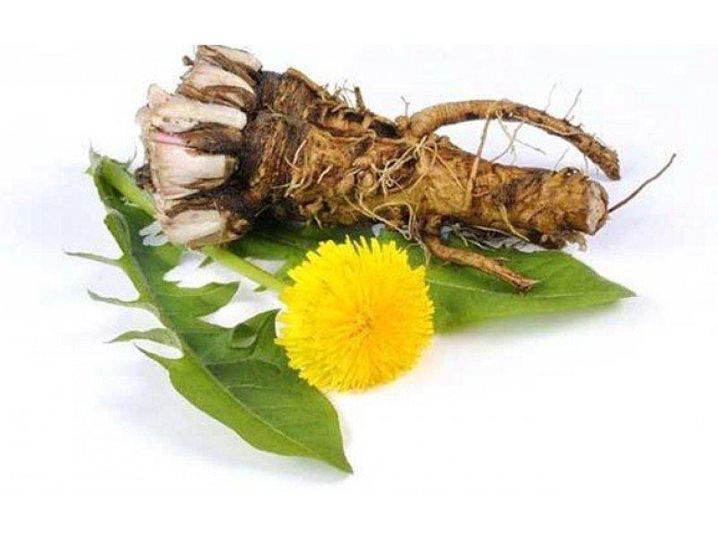 Кульбаба як лікарська рослина