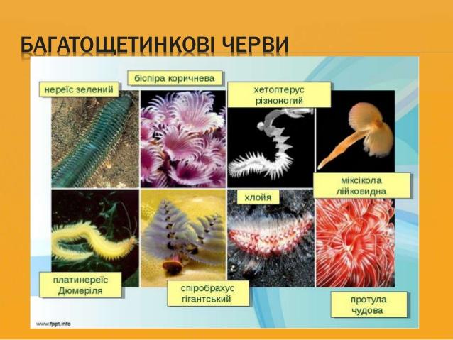 Багатощетинкові черви