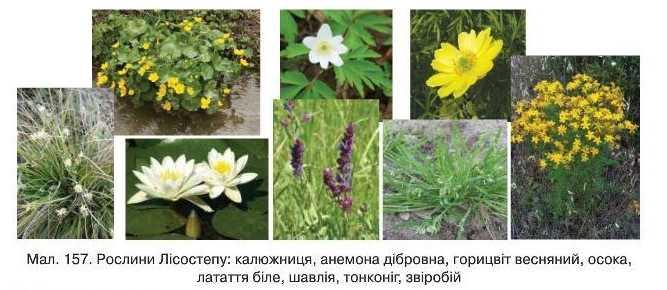 Рослини лісостепу