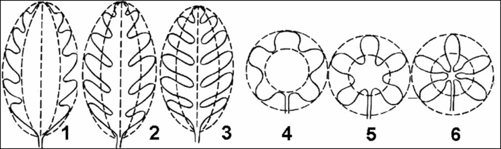 Анатомічна будова листка