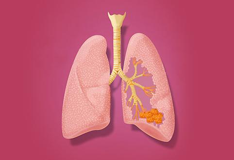 Що таке дихальна система