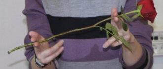 Як посадити розу